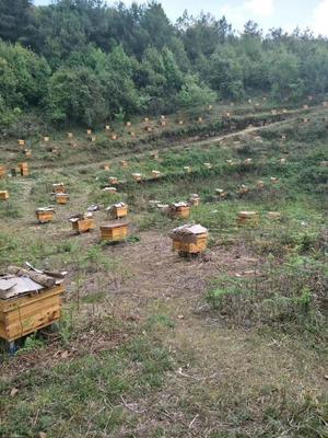 云南省昆明市官渡区土蜂蜜 塑料瓶装 2年以上 100%