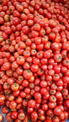 这是一张关于大红硬果 通货 弧二以上 大红的产品图片