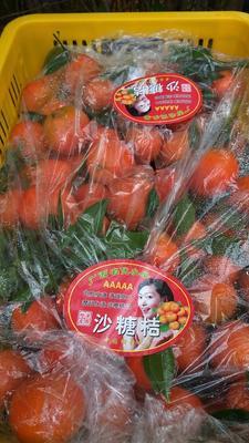 这是一张关于沙糖桔 4 - 4.5cm 1 - 1.5两的产品图片