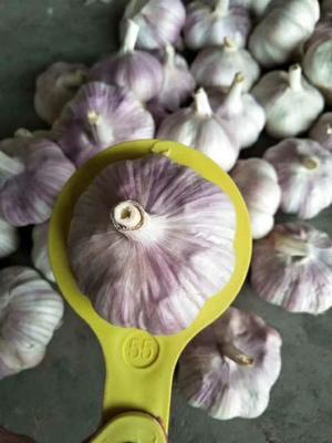 这是一张关于金乡大蒜 5.5-6.0cm 多瓣蒜的产品图片