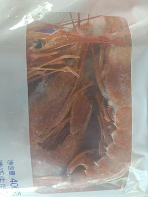 河北省廊坊市香河县阿根廷红虾