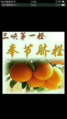 重庆奉节县奉节脐橙 65 - 70mm 4-8两
