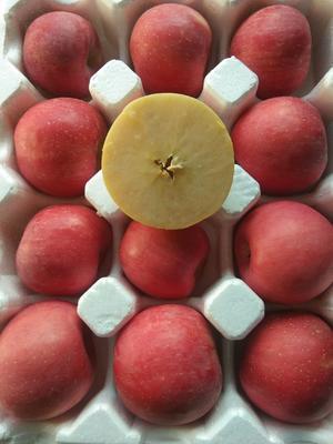 这是一张关于红富士苹果 75mm以上 条红 纸袋的产品图片