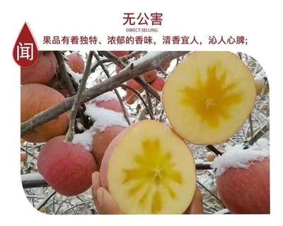 江西省宜春市奉新县阿克苏冰糖心苹果 光果 条红 80mm以上