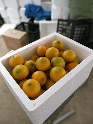 这是一张关于皇帝柑 的产品图片