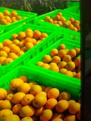 这是一张关于冰糖橙 70-75mm 4-8两的产品图片