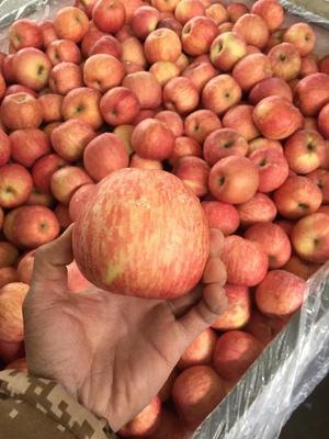 山东省临沂市蒙阴县红富士苹果 80mm以上 条红 纸袋