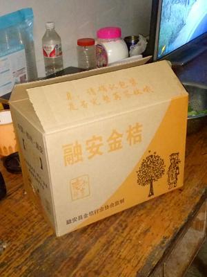广西壮族自治区柳州市融安县脆蜜金桔 5-6cm 1-1.5两