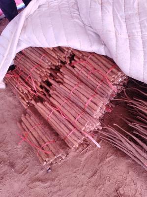 这是一张关于铁棍山药 30~40cm的产品图片