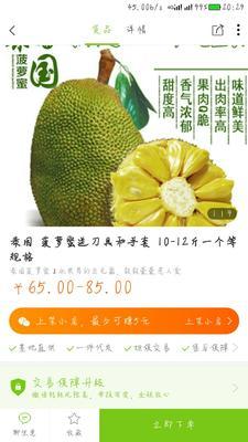 湖北省襄阳市枣阳市泰国菠萝蜜 10-15斤