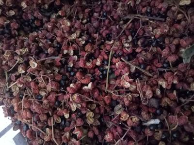这是一张关于大红袍花椒 一级 干花椒的产品图片