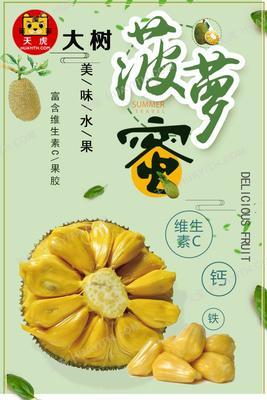 广东省茂名市高州市高山老树菠萝蜜干苞 10-15斤