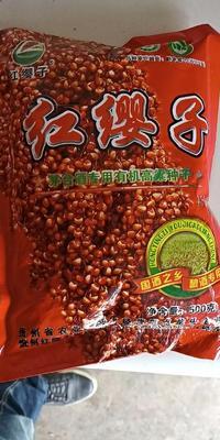 这是一张关于红樱子高粱种子 ≥99% ≥99% ≤13%的产品图片
