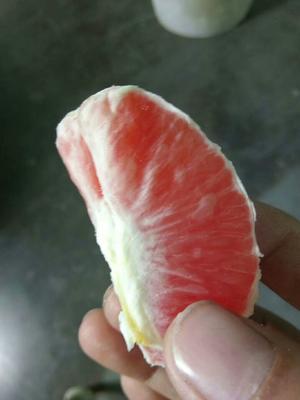 这是一张关于红橙石甜瓜 0.3斤以上的产品图片
