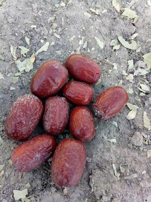 这是一张关于新疆红枣 一级的产品图片