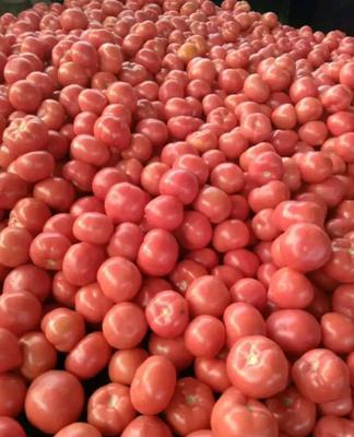 这是一张关于硬粉番茄 通货 弧二以上 硬粉的产品图片