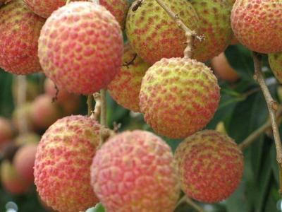 这是一张关于三月红荔枝 2cm 的产品图片