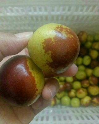 这是一张关于沾化冬枣 直口 10-20g的产品图片