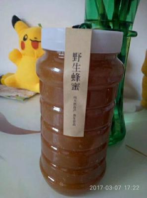 河南省洛阳市洛宁县土蜂蜜 塑料瓶装 2年以上 100%