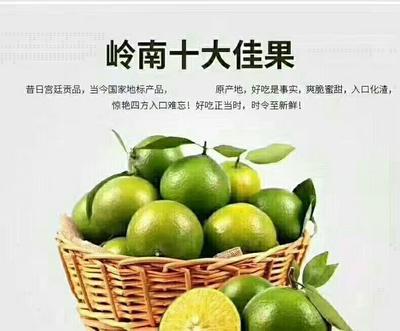 广东省韶关市仁化县皇帝柑 5.5 - 6cm 2 - 3两