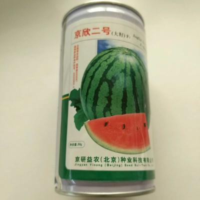 山东省临沂市兰山区京欣西瓜种子 ≥85% 亲本(原种)