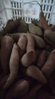 这是一张关于西瓜红 红皮 混装通货的产品图片