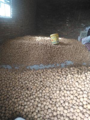 新疆维吾尔自治区阿克苏地区温宿县薄皮核桃