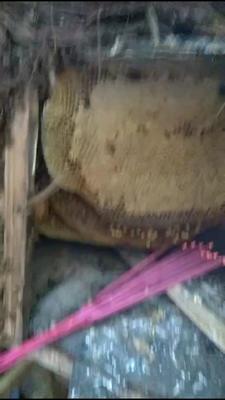 这是一张关于土蜂蜜 桶装 1年 100%的产品图片