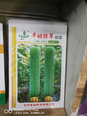重庆合川区丝瓜种子
