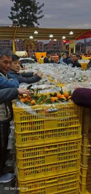 广东省清远市英德市沙糖桔 4.5 - 5cm 1 - 1.5两