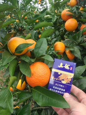 这是一张关于蜜香橙 85-90mm 4-8两的产品图片