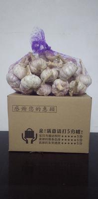 山东省济宁市金乡县金乡大蒜 5~5.5cm 多瓣蒜