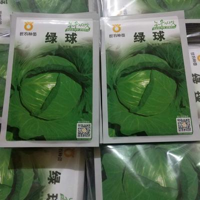 山东省临沂市兰山区绿甘蓝种子 ≥85% 杂交种