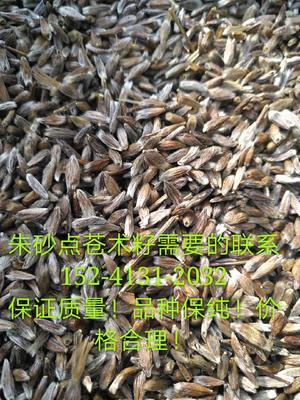 这是一张关于苍术种子的产品图片