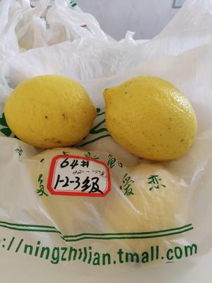 这是一张关于尤力克柠檬 2 - 2.6两的产品图片
