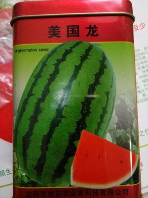 江苏省宿迁市沭阳县花皮西瓜种子 ≥90% 二倍体杂交种