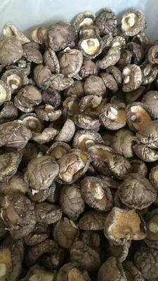 陕西省商洛市商南县虎皮香菇干 散装 1年