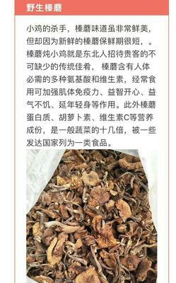吉林省白山市抚松县蘑菇  长白山野生棒蘑