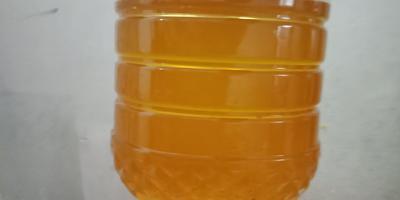 广东省梅州市梅江区压榨一级山茶油