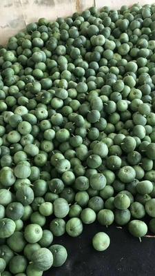 这是一张关于绿宝石甜瓜 0.5斤以上的产品图片