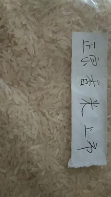 这是一张关于长粒香大米 一等品 晚稻 籼米的产品图片