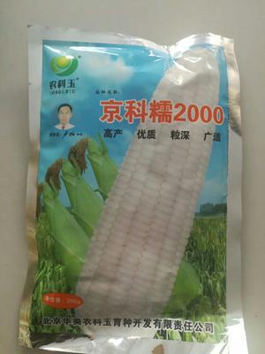 河南省郑州市惠济区玉米种子 双交种 ≥98% ≥99% ≥97% ≤10%