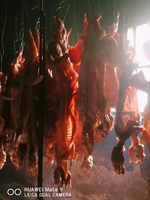 这是一张关于兔肉类 简加工的产品图片