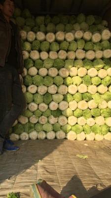 这是一张关于北京三号大白菜 3~6斤 净菜的产品图片