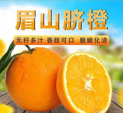这是一张关于9号脐橙 65 - 70mm 4-8两的产品图片