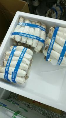 这是一张关于柱状杏鲍菇 鲜杏鲍菇 一级 3cm~4cm的产品图片