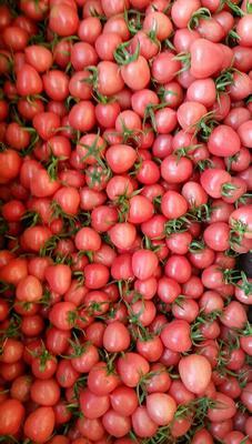 这是一张关于粉贝贝圣女果的产品图片