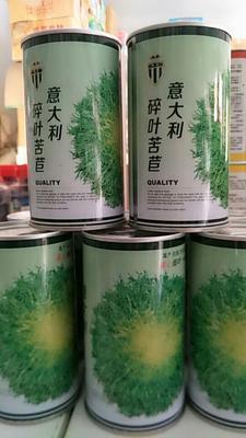 河南省郑州市惠济区苦苣种子