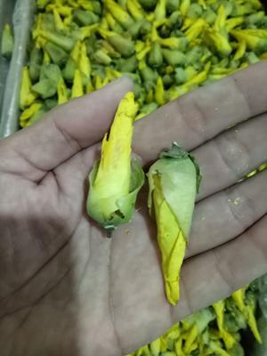 这是一张关于杨贵妃黄秋葵 3 - 6cm的产品图片