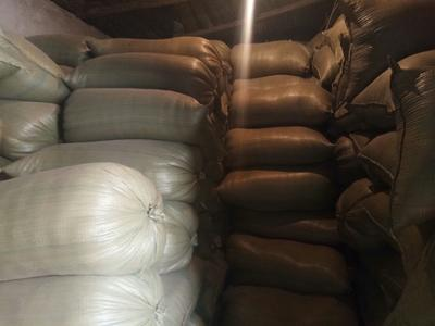 黑龙江省哈尔滨市五常市五常大米 一等品 晚稻 粳米
